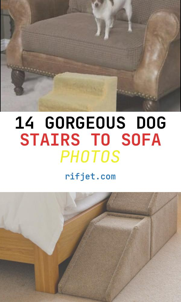 14 Gorgeous Dog Stairs to sofa Photos