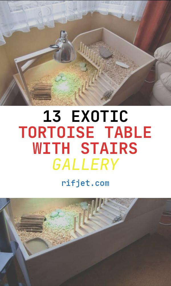 13 Exotic tortoise Table with Stairs Gallery