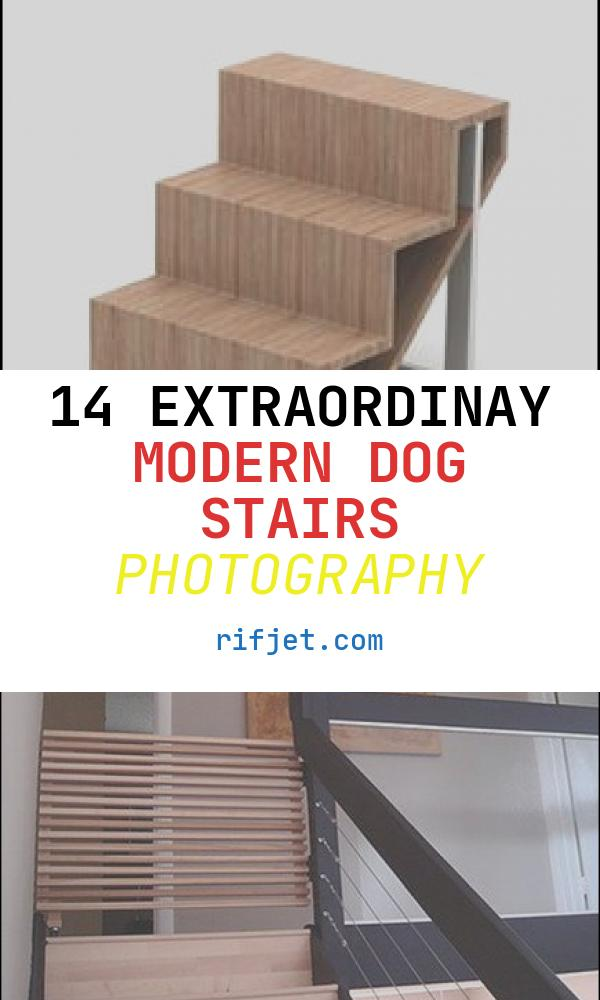 Modern Dog Stairs Beautiful 17 Best Dog Ramp Ideas Images