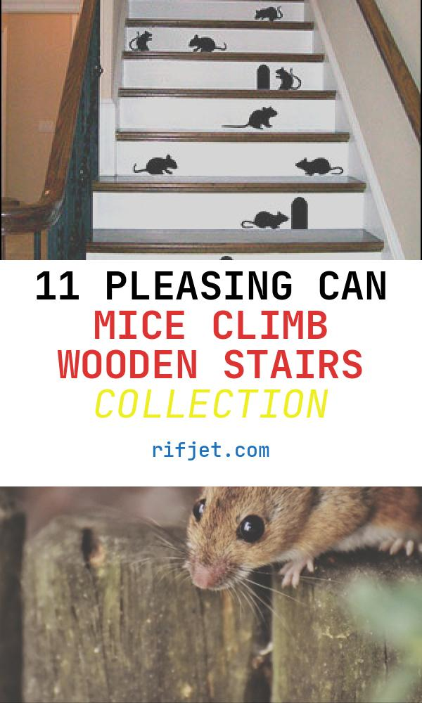 11 Pleasing Can Mice Climb Wooden Stairs Collection