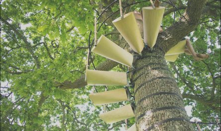 Canopy Stairs for Trees Inspirational Canopystair is A Versatile Tree Staircase Ignant