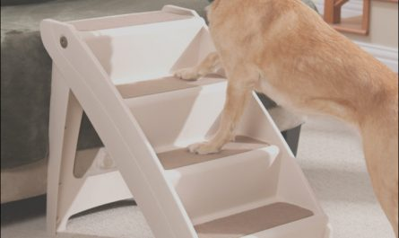 Dog Stairs Pets at Home Lovely Best Dog Stairs and Ramps Reviews 2018 top 5 Re Mended