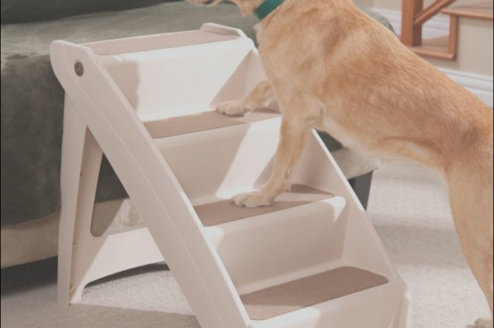13 Acceptable Dog Stairs Pets at Home Photography